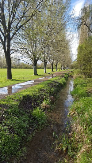 Tree Water Park - Man Made Space Grass Tranquil Scene Calm Tranquility Scenics