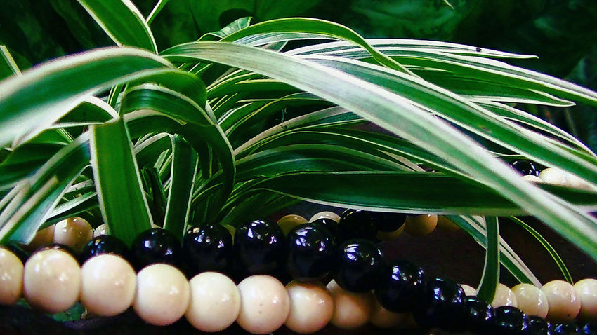 Beads in the Fresh Green Plants Beads, Black Beads, White Beads, Black And White, Plants, Green Plants, Fresh Leaves, Fresh Plants, Nature, Green