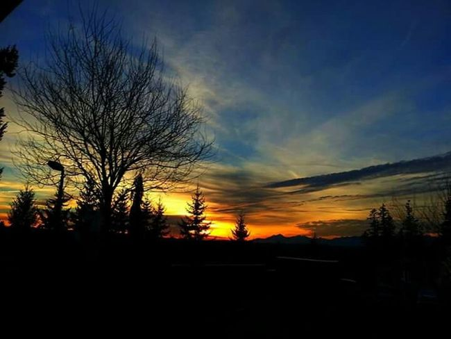 Epic Shot Photography Sky And Trees Northwestsunsets Tree_collection  Skylover EyeEm Best Shots - Trees Sunset #sun #clouds #skylovers #sky #nature #beautifulinnature #naturalbeauty #photography #landscape Sunset_collection Natgeo Eyeemsunset