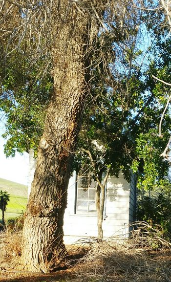 .....my favorite place to be...somewhere between serenity and reality, Kaos of Emotion Lake Herman Road In Benicia TreePorn Zooming In Wasting Time Unclear Direction Standing Alone Abonded Buildings Just Thinking Skyporn Tree Porn Treescollection Seeking Inspiration Feeling Empty ..