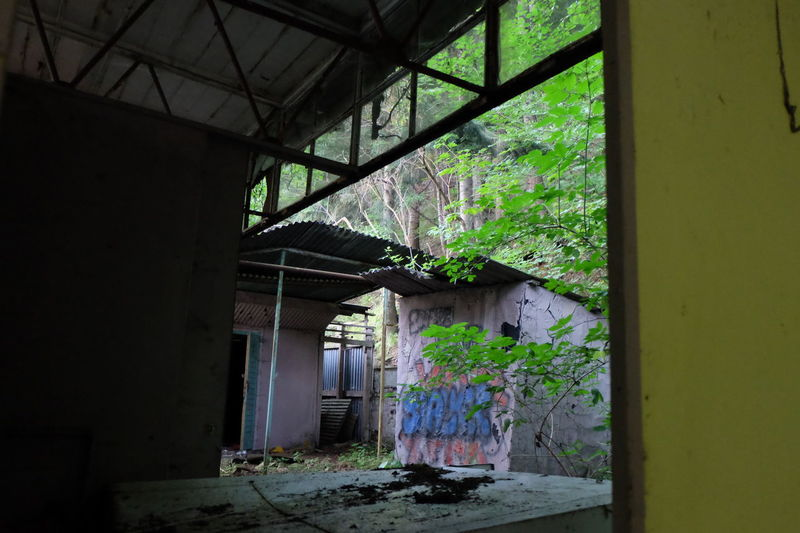 Architecture Built Structure House Abandoned Indoors  Day No People Window EyeEmNewHere The Secret Spaces Stillness Green Color Underground Life Wood