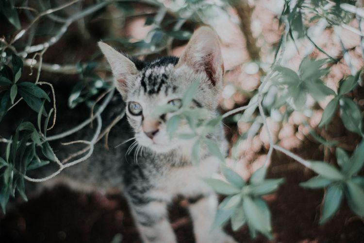Cat Green Eyes,