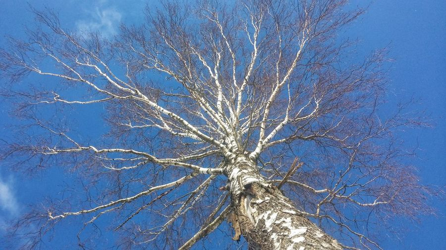 Tree birth Clear Sky Nature Tree Winter Blue