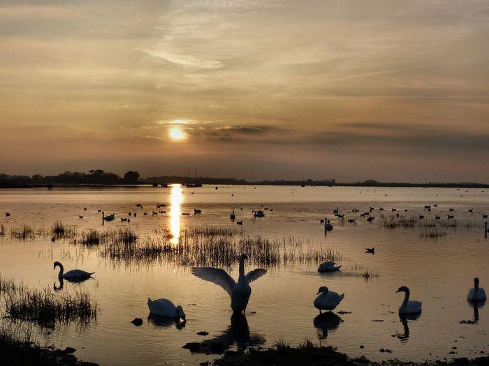 Birds on beach against sky during sunset