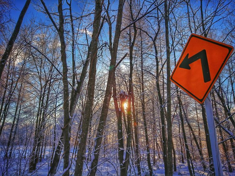 ⤴️の先には朝陽🌞 Black_chica1801 田舎暮らし Sky Agriculture Chica's Photo Trees Landscape_photography Winter Wonderland Winter Snow Landscape Nature Chica's Winter Winterlandscape 朝陽 朝日 Sunrise Chica's Sky Communication Low Angle View Guidance Road Sign Day No People Full Frame Outdoors
