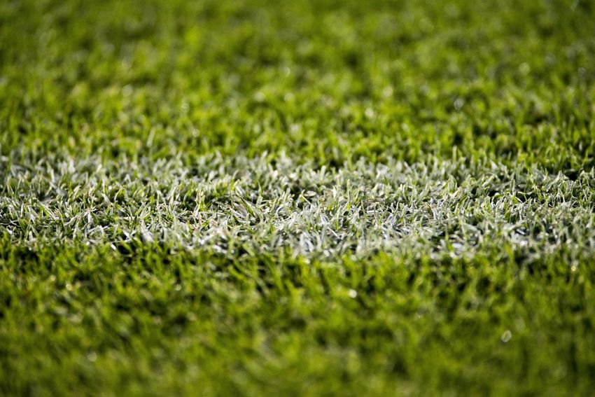 Close up of the grass in a soccer field. Abundance Backgrounds Beauty In Nature Close-up Day Field Food And Drink Full Frame Grass Green Color Growth Land Nature No People Outdoors Plant Selective Focus Soccer Sport Tranquility