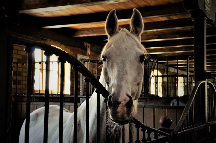 Horse Indoors  Agriculture No People Mammal Day