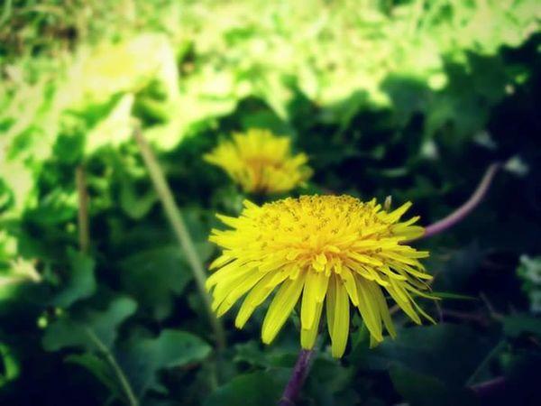 ~ artificial flower ~