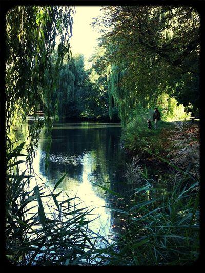 Beautiful Lake Lakeshore Nature Waterscape