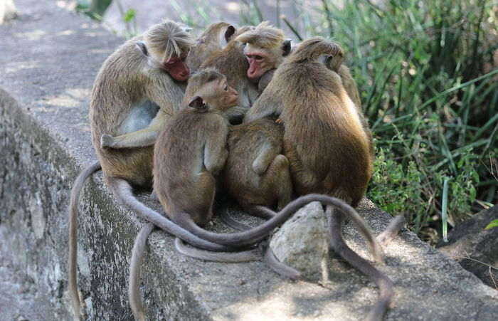 Animal Encounters Animal Family Animal Get Together Animal In The Wild Baboon Baby Baboon Family Baboon Instincts Baboons Eating Mammal Relaxation Resting Tenderness Tenderness And Love True Feelings Wildlife An Eye For Travel