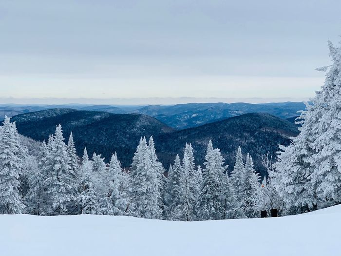 Tremblant Winter Cold Temperature Snow Tree Sky Beauty In Nature Plant Mountain Scenics - Nature Nature Day No People Tranquility Tranquil Scene Non-urban Scene Landscape Cloud - Sky