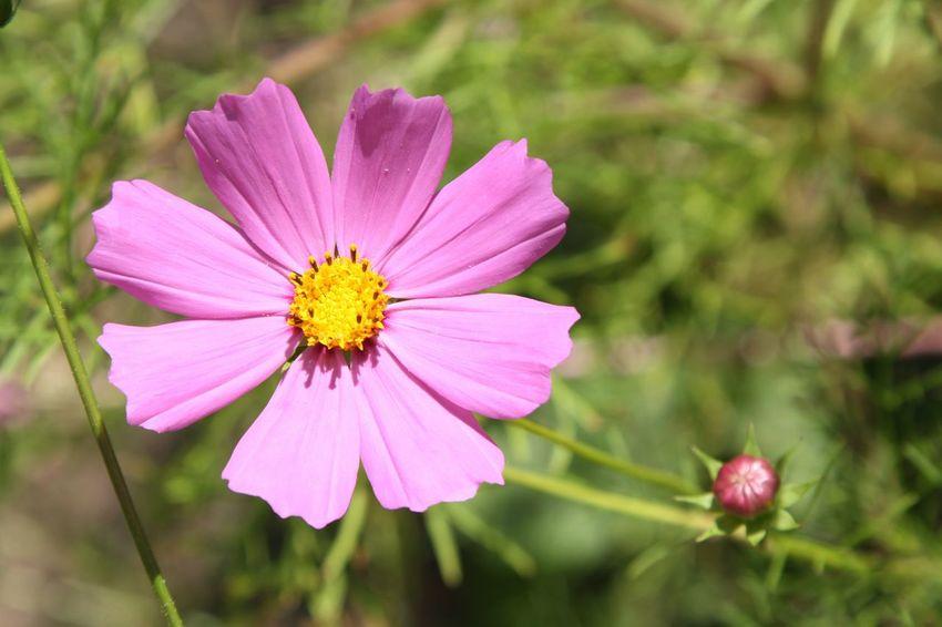 Flower Rose Flower Pink Flower Nature Nature Photography Beauty Estonia Estonian Nature Eesti Loodus Eesti цветок  розовый цветок природа эстонии Природа эстония фото природы фотография