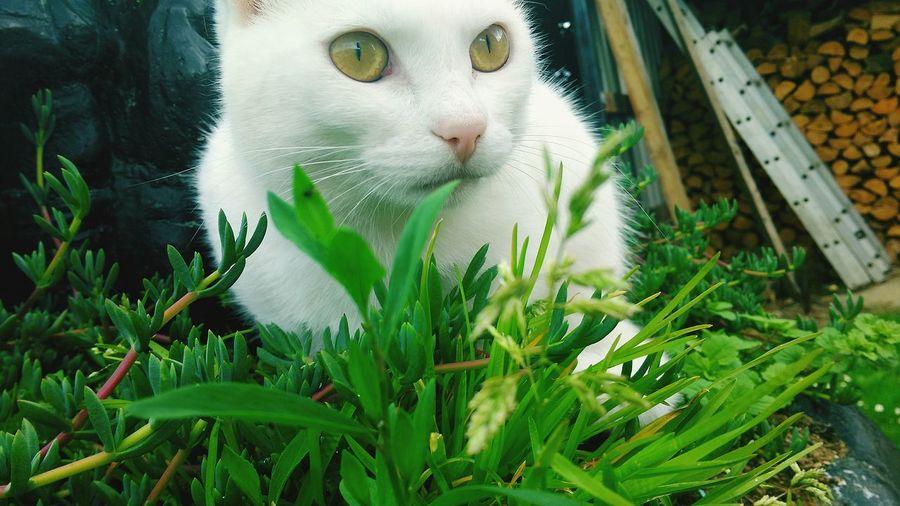 Cat Waterford First Eyeem Photo