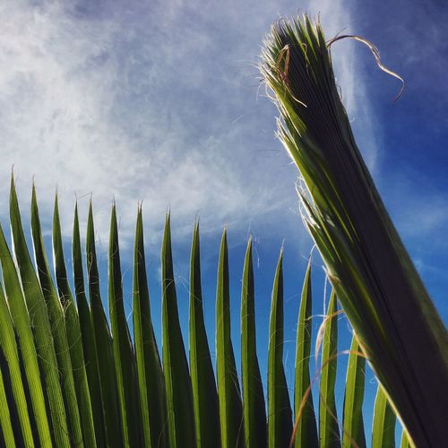 Close-up of palm leaf against sky
