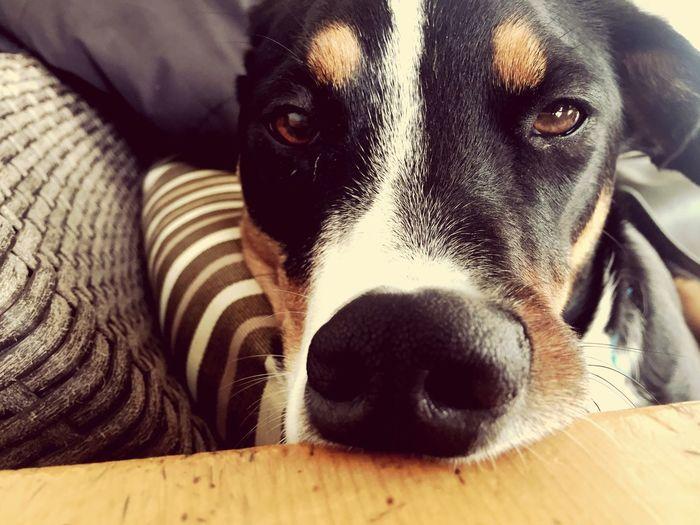 Dog Lexi