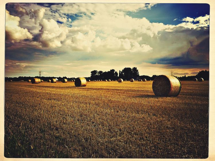 Harvest Harvest Time Summer Summer Fields Clouds Clouds And Sky Cloud_collection  Clouds Niederrhein Germany