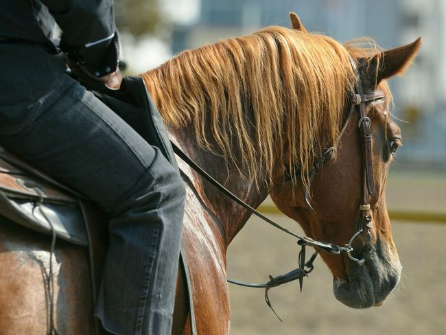 riding EyeEm Best Shots EyeEm Best Edits Horse Horses Horse Riding Horseriding Horse Photography  HEAD Animal Head  Mane Harness Riding Horses Equine Horsehead