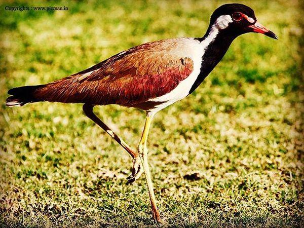 Photograph Photography Bird Jantarmantar Jaipurcity Jaipur Passionate Canon_official Canon700dshots DSLR Patience PicturePerfect Instamood Instatravelhub Instagrampicoftheday Instapic Instagram India Rajasthan Beautifulbird