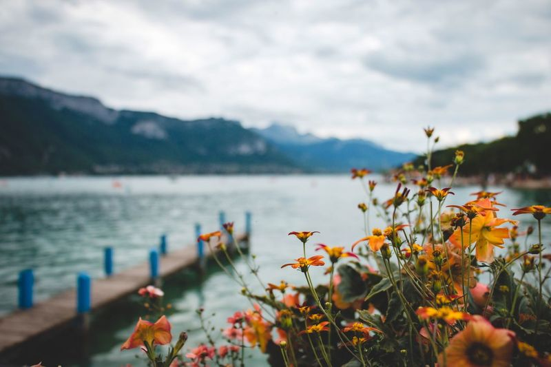 EyeEm Selects Nature Mountain Beauty In Nature Flower Plant Water No People Focus On Foreground Day Freshness Close-up Scenics Outdoors Blue Orange Color Explore Flowers Orange Flower Summer France Travel Photography Adventure Travel Destinations Tourism