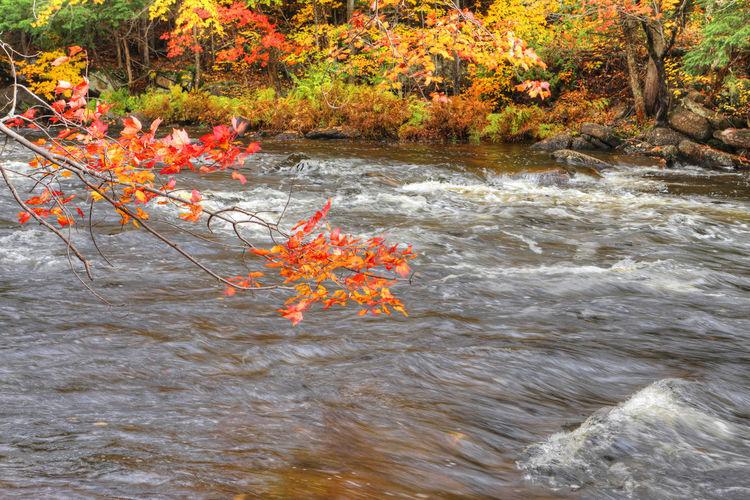 Autumn trees by lake