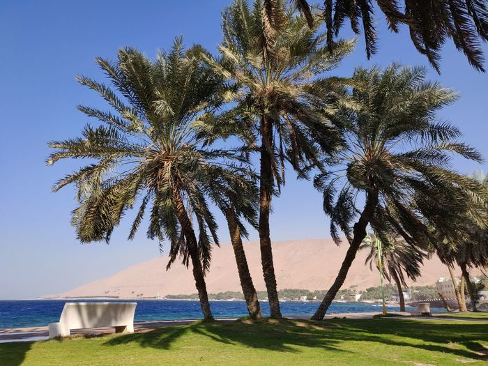 Palm trees by sea against clear sky