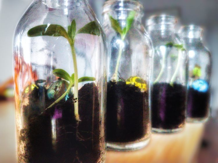 Orang Green Smartphone Foucs On Foreground Indoor Small Sunflower Bottels Clod Reflection Saplings