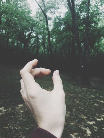 Human Hand Real People Tree Hand Human Body Part One Person Plant Body Part Lifestyles Personal Perspective Day Human Finger Finger Unrecognizable Person Nature Leisure Activity