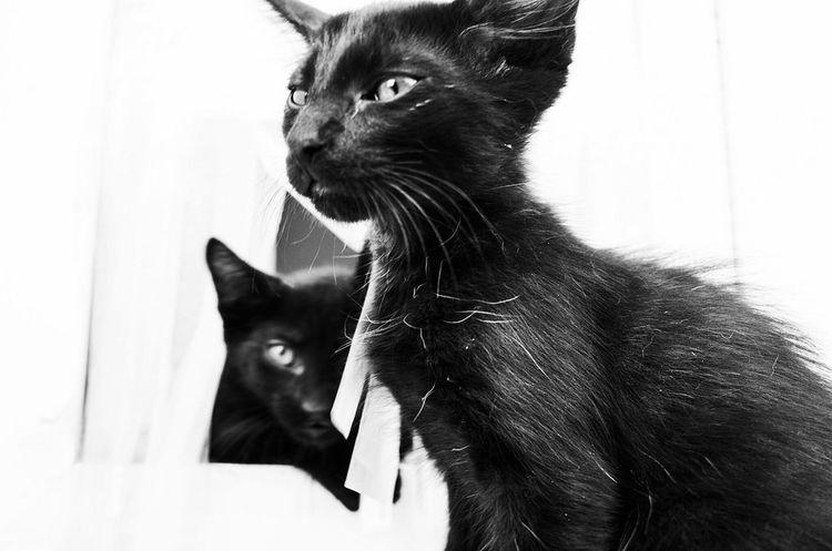 Pets Feline Domestic Cat Protruding Collar Black Color Close-up Animal Eye Cat Animal Face