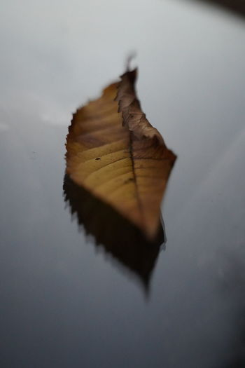 High angle view of dry leaf on table