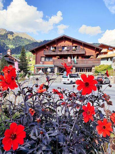 Schweiz 🇨🇭, Schweiz Schweizer Alpen Herbststimmung каштаны осень Herbst Fall Fall Beauty Fall Colors Kastanien Domkashtana Flower Tree Red Mountain Roof House Sky Architecture Building Exterior Built Structure