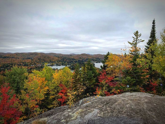 Laurentides - Automne 🍁🍂 Landscape_photography Nikon Autumn EyeEm Nature Lover EyeEmNewHere Cloud - Sky Plant Sky Beauty In Nature Nature Growth Flower Flowering Plant No People Tranquility Field Day Freshness Land Outdoors Multi Colored Landscape Tranquil Scene Tree Scenics - Nature