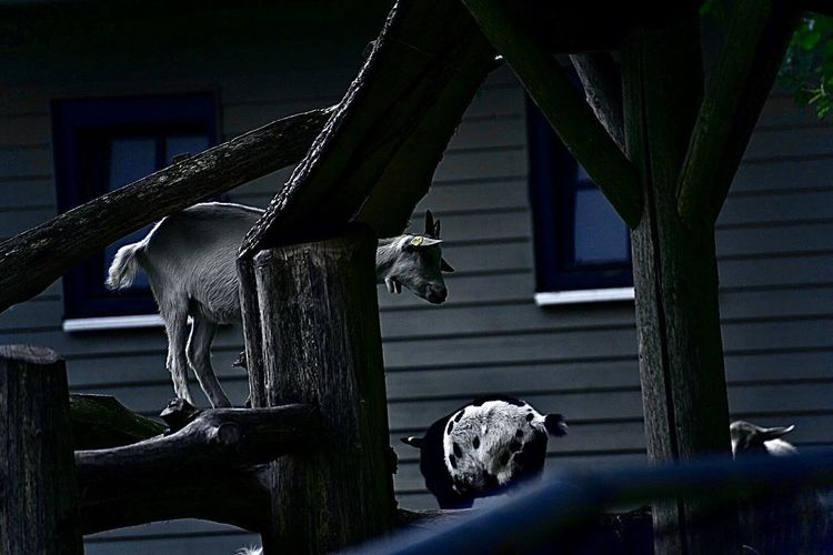 View of an animal sculpture on wooden wall of house