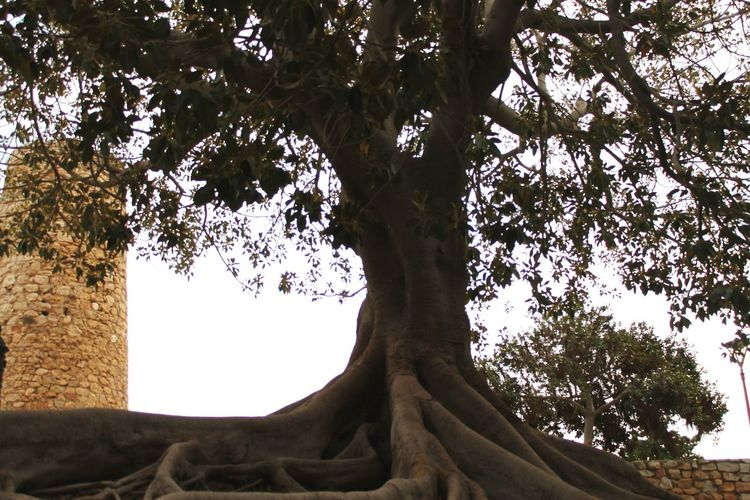 No tenia claro hacia donde debia dirigirme, pero confiaba en que, cuando llegara lo sabria, porque los árboles estarian cantando Arbol. Murcia