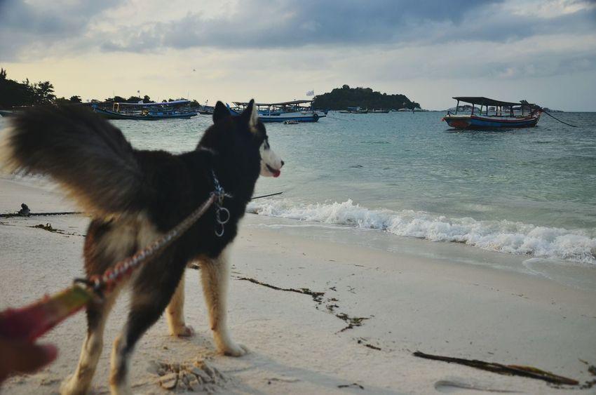 My Dog Dog Dogs Life Is A Beach On The Beach Beach Enjoying Life Animal