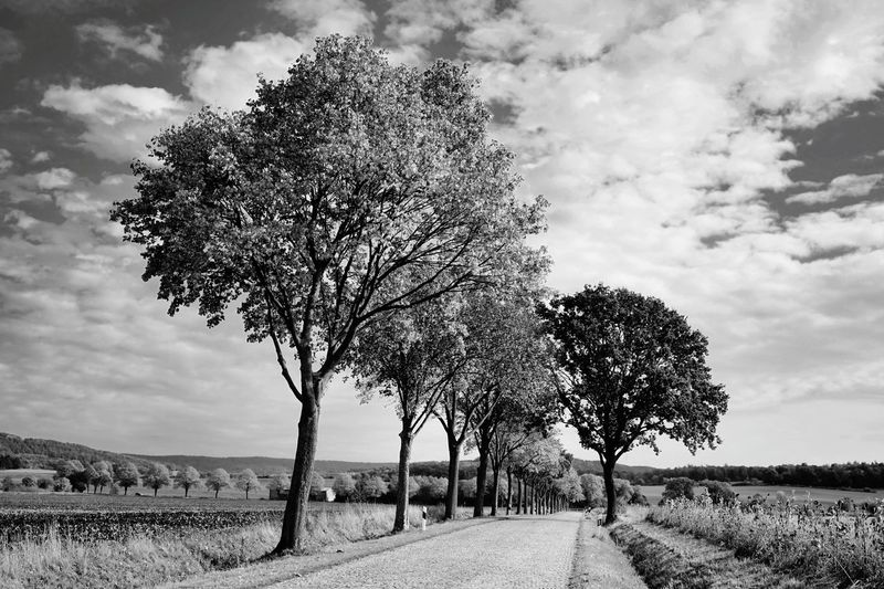 Tree by road on field against sky