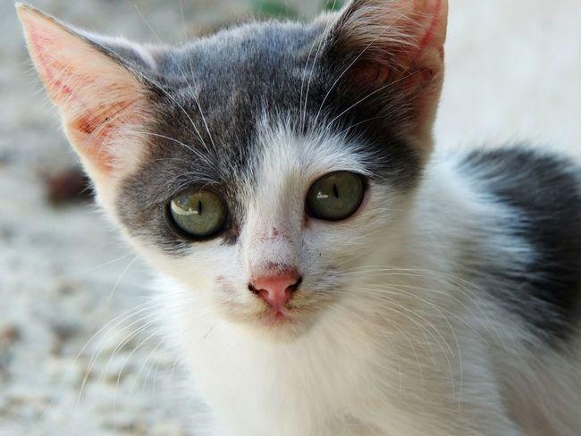 Taking Photos Hello World EyeEm Open Edit Cat Cute Pet Animal Eyes