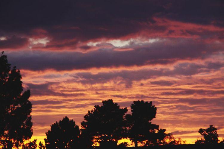 der Blick aus meinem Fenster Steinhude-am-meer.de - Dein Meer-Foto Steinhude Autumn Sonnenuntergang Bäume Bäume Und Himmel Forest Blue