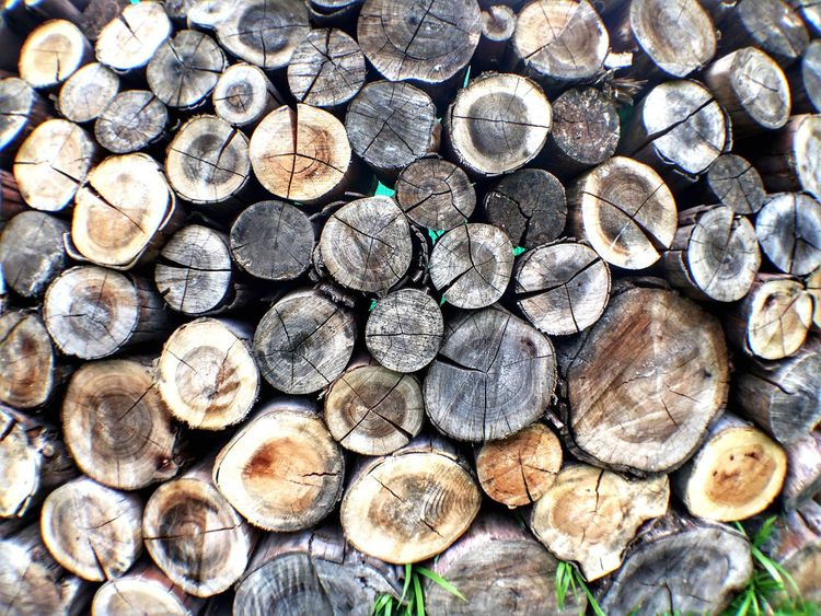 Trama 🌴 Firewood Wood Forestry Industry Environmental Issues Deforestation Fossil Fuel Textured  Backgrounds Popckorn Outdoors