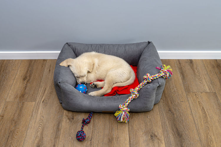 View of a dog resting on floor