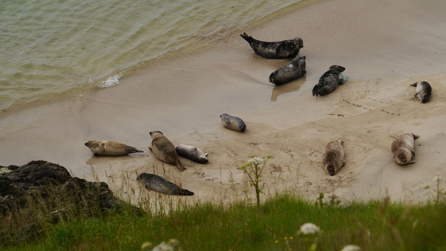 High angle view of seals on beach