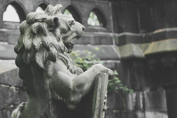 ~ 🦁🛡~ Statue Day Sculpture Outdoors Close-up No People Lion Architecture Art And Craft Stone - Object Getting Inspired Bridge - Man Made Structure Gargoyle Religion Hamburg Light And Shadow Lion Statue Royal Architectural Detail Arts Culture And Entertainment Geometric Shapes Details Shield Guardian Canonphotography