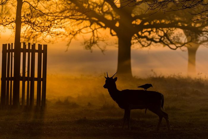 Silhouette Animal Themes Sunset Deer Tree Nature One Animal Animal Wildlife Animals In The Wild Mammal Outdoors No People Stag Beauty In Nature Day Sky