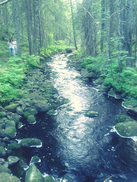 Purenature Nature Forest River Water Taking Photos Tb Summer