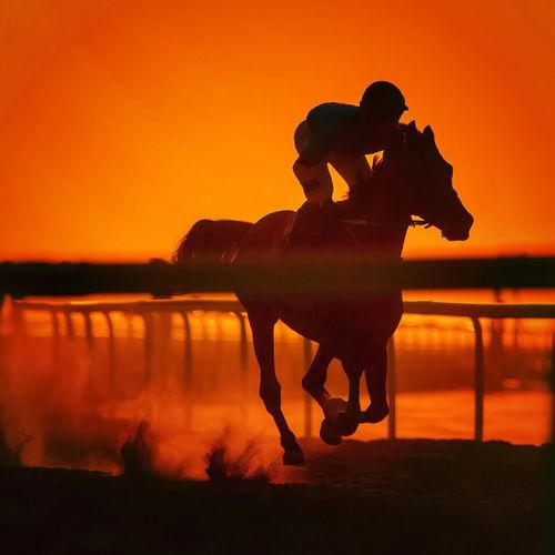 Horse Racing in the golden hour, a Photographer's dream Golden Hour Sunset Silhouette Orange Color Horse Full Length Riding Horseback Riding Outdoors Real People Sky Nature Beauty In Nature People The Architect - 2018 EyeEm Awards