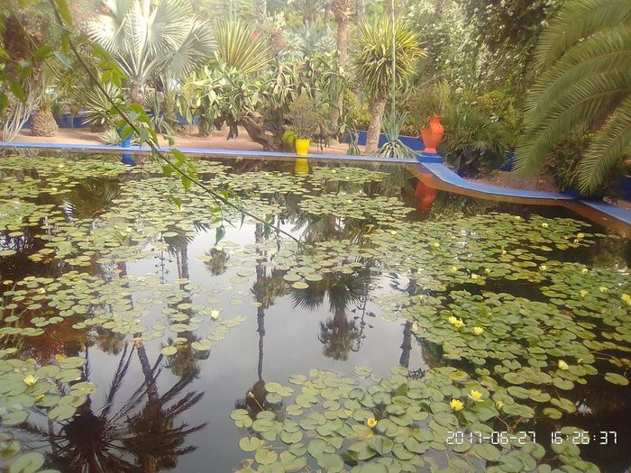 Beauty In Nature Day Growth Lake Leaf Lifestyles Men Nature Outdoors Palm Tree People Plant Real People Reflection Tree Water Waterfront