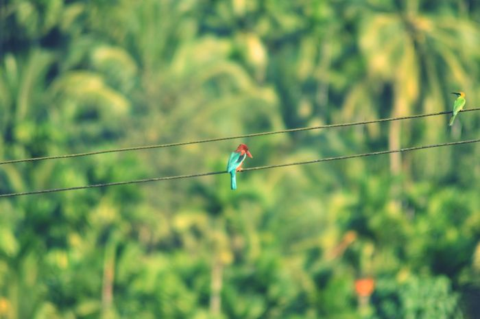EyeEmNewHere Kingfisher Bird Electric Wire Parrot Indian Landscape Birds Of EyeEm  Green Forest Background Beauty EymEm Nature Lovers Blessed Day
