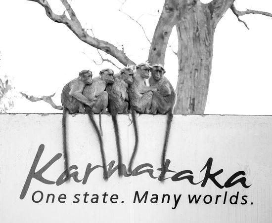 Paper Tree Outdoors White Background No People Message Monkeys Cuddles Karnatakatourism Karnatakadiaries Karnataka Bandipur Group Group Of Monkeys Hug Tourism Blackandwhite