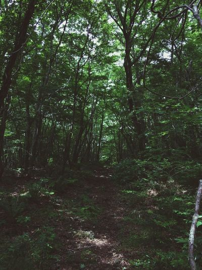 사려니숲길 좋아서 다시 걷기...