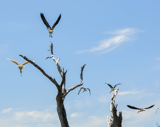 Low angle view of birds flying next to tree