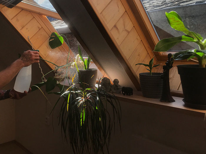 Person holding potted plant by window at home